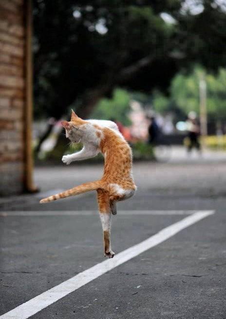 Saut chat