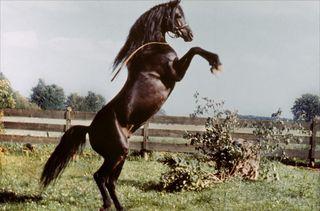 Etalon-noir-1979-01-g